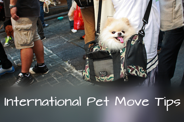 International Pet Moving Tips